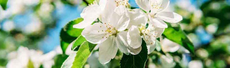 Flowery_perfumes_206615781_S