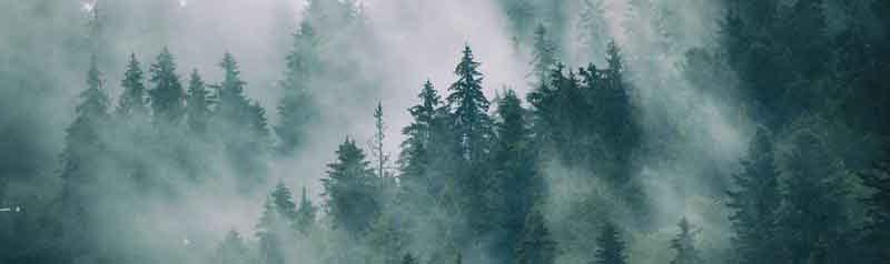 Profumi legnosi