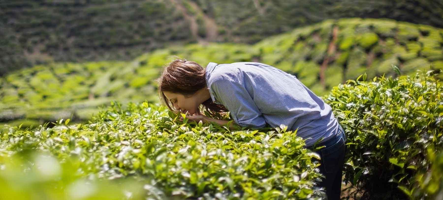 Aromaterapia ricordi benessere annusare